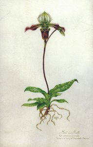 "Gail Guth • <em>Orchid on Vellum</em> • Watercolor • 9""×13"" • NFS"