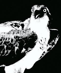 """Nancy V. Ridenour • <em>Osprey Abstract</em> • Archival inkjet on canvas • $150.00<a class=""""purchase"""" href=""""https://state-of-the-art-gallery.square.site/product/nancy-v-ridenour-osprey-abstract/346"""" target=""""_blank"""">Buy</a>"""