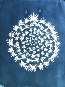 """Laurie Snyder • <em>Ipomea Cardinalis, 2020</em> • Cyanotype • 24""""×29"""" • $700.00<a class=""""purchase"""" href=""""https://state-of-the-art-gallery.square.site/product/laurie-snyder-ipomea-cardinalis-2020/362"""" target=""""_blank"""">Buy</a>"""