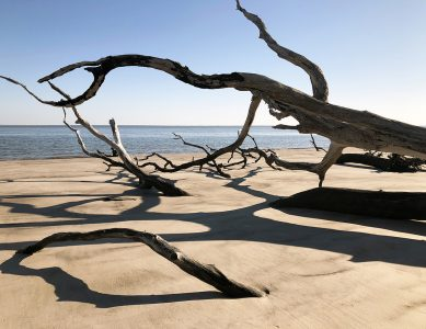 "Eva M. Capobianco • <em>Fallen Trees at Big Talbot Island, FL</em> • Digital print on aluminum plate • 14""×11"" • $150.00<a class=""purchase"" href=""https://state-of-the-art-gallery.square.site/product/eva-m-capobianco-fallen-trees-at-big-talbot-island-fl/391"" target=""_blank"">Buy</a>"