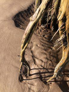 "Eva M. Capobianco • <em>Roots and Sand, Big Talbot Island, FL</em> • Digital photo on aluminum plate • 8½""×11"" • $75.00"