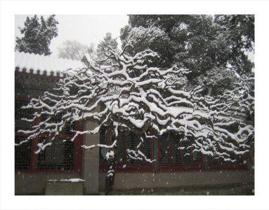 "Daniel McPheeters • <em>Garden, Forbidden City</em> • Archival pigment print • 20""×16"" • $120.00"
