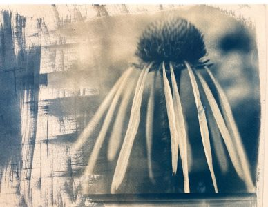 """Kim McAlear • <em>Shades of Blue</em> • Cyanotype photograph • 8""""×10"""" • NFS<a class=""""purchase"""" href=""""mailto:kim.a.noll@gmail.com?subject=Inquiry about Shades of Blue"""" target=""""_blank"""">Contact</a>"""