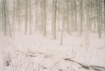 "bill mclaughlin • <em>Winter Woodland</em> • 8""×10"" • $200.00<a class=""purchase"" href=""mailto:wildearthfarmny@gmail.com?subject=Inquiry about Winter Woodland"" target=""_blank"">Contact</a>"