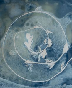 """Christine Chin • <em>Invasive Species Cyanotypes: Eurasian Watermilfoil (Myriophyllum spicatum)</em> • Cyanotype photogram • 9""""×11"""" • $50.00<a class=""""purchase"""" href=""""https://state-of-the-art-gallery.square.site/product/christine-chin-invasive-species-cyanotypes-eurasian-watermilfoil-myriophyllum-spicatum-/610"""" target=""""_blank"""">Buy</a>"""