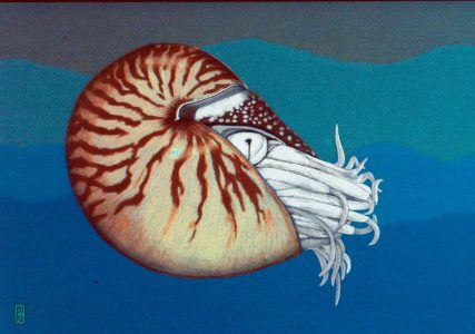 """Margy Nelson • <em>chambered nautilus</em> • Digital print • 12""""×9"""" • $40.00<a class=""""purchase"""" href=""""https://state-of-the-art-gallery.square.site/product/margy-nelson-chambered-nautilus/555"""" target=""""_blank"""">Buy</a>"""