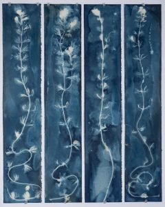 """<div style=""""pointer-events: none"""">Christine Chin • <em>Invasive Species Cyanotype: Eurasian Watermilfoil (Myriophyllum spicatum)</em> • Cyanotype • 24""""×30"""" • $600.00<a class=""""purchase"""" href=""""https://state-of-the-art-gallery.square.site/product/christine-chin-invasive-species-cyanotype-eurasian-watermilfoil-myriophyllum-spicatum-/633"""" target=""""_blank"""">Buy</a></div>"""