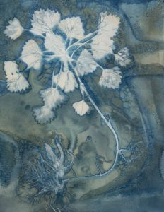"""Christine Chin • <em>Invasive Species Cyanotypes: European Water Chestnut: Trapa natans</em> • Cyanotype photogram • 9""""×11"""" • $70.00<a class=""""purchase"""" href=""""https://state-of-the-art-gallery.square.site/product/christine-chin-invasive-species-cyanotypes-european-water-chestnut-trapa-natans/604"""" target=""""_blank"""">Buy</a>"""