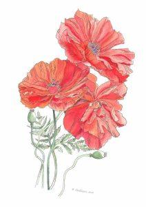 "Marie Sanderson • <em>Poppies</em> • Pen and watercolor • 10""×14"" • $275.00"