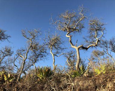 "Eva M. Capobianco • <em>Small Trees at Big Talbot Island, FL</em> • Digital print on aluminum plate • 14""×11"" • $150.00<a class=""purchase"" href=""https://state-of-the-art-gallery.square.site/product/eva-m-capobianco-small-trees-at-big-talbot-island-fl/392"" target=""_blank"">Buy</a>"