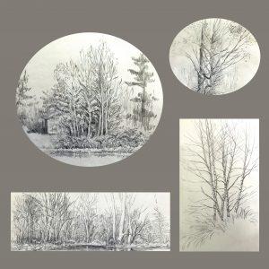 "Frances Fawcett • <em>Tree Sketches 2</em> • Graphite pencil on paper • 12""×12"" • NFS"