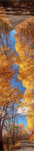 """TIm Larkin • <em>Fall</em> • Archival pigment print • 16""""×48"""" • $150.00"""