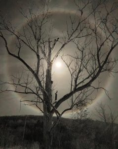 """Coleen Foley • <em>Moon Halo and Her Tree</em> • Metal print (aluminum) • 11""""×15"""" • $75.00<a class=""""purchase"""" href=""""mailto:coleenfoley2010@gmail.com?subject=Inquiry about Coleen Foley.03.Moon Halo and her Tree"""" target=""""_blank"""">Contact</a>"""