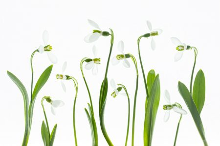 """John Mack • <em>Snowdrops</em> • Archival inkjet • 13""""×19"""" • $299.00<a class=""""purchase"""" href=""""mailto:smashingoats@gmail.com?subject=Inquiry about Snowdrops"""" target=""""_blank"""">Contact</a>"""