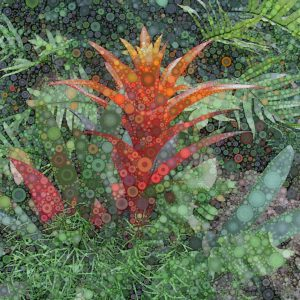 """Daniel McPheeters • <em>Red Bromeliad</em> • Mixed media on panel • 12""""×12"""" • $50.00<a class=""""purchase"""" href=""""https://state-of-the-art-gallery.square.site/product/daniel-mcpheeters-red-bromeliad/570"""" target=""""_blank"""">Buy</a>"""