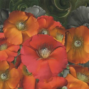 """Stan Bowman • <em>Poppies</em> • Paper print on foam core  • 8""""×10"""" • $35.00<a class=""""purchase"""" href=""""https://state-of-the-art-gallery.square.site/product/stan-bowman-poppies/562"""" target=""""_blank"""">Buy</a>"""