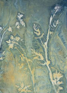 """Christine Chin • <em>Invasive Species Cyanotypes: Wild Parsnip (Pastinaca sativa)</em> • Cyanotype photogram • 11""""×15"""" • $70.00<a class=""""purchase"""" href=""""https://state-of-the-art-gallery.square.site/product/christine-chin-invasive-species-cyanotypes-wild-parsnip-pastinaca-sativa-/592"""" target=""""_blank"""">Buy</a>"""