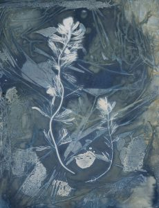 """Christine Chin • <em>Invasive Species Cyanotypes: Eurasian Watermilfoil (Myriophyllum spicatum)</em> • Cyanotype photogram • 9""""×11"""" • $50.00<a class=""""purchase"""" href=""""https://state-of-the-art-gallery.square.site/product/christine-chin-invasive-species-cyanotypes-eurasian-watermilfoil-myriophyllum-spicatum-/596"""" target=""""_blank"""">Buy</a>"""