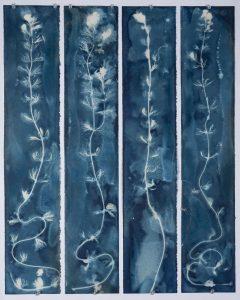 "Christine Chin • <em>Invasive Species Cyanotypes: Eurasian Watermilfoil (Myriophyllum spicatum)</em> • Cyanotype photogram • 24""×30"" • $250.00"