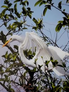 """Nancy Ridenour • <em>White Egret in Tree</em> • Digital image • 7""""×9"""" • $35.00<a class=""""purchase"""" href=""""https://state-of-the-art-gallery.square.site/product/nancy-ridenour-white-egret-in-tree/541"""" target=""""_blank"""">Buy</a>"""