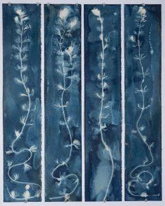 "Christine Chin • <em>Invasive Species Cyanotype: Eurasian Watermilfoil (Myriophyllum spicatum)</em> • Cyanotype • 24""×30"" • $600.00<a class=""purchase"" href=""https://state-of-the-art-gallery.square.site/product/christine-chin-invasive-species-cyanotype-eurasian-watermilfoil-myriophyllum-spicatum-/633"" target=""_blank"">Buy</a>"