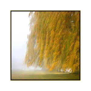 """David Watkins Jr • <em>Willows in the Mist No.1</em> • Archival pigment on canvas • 30""""×30"""" • $425.00<span class=""""sold""""></span>"""