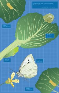 """Margy Nelson  • <em>Blueprint for a Butterfly </em> • Limited edition digital print  • 22""""×12"""" • $250.00<a class=""""purchase"""" href=""""https://state-of-the-art-gallery.square.site/product/margy-nelson-blueprint-for-a-butterfly/628"""" target=""""_blank"""">Buy</a>"""